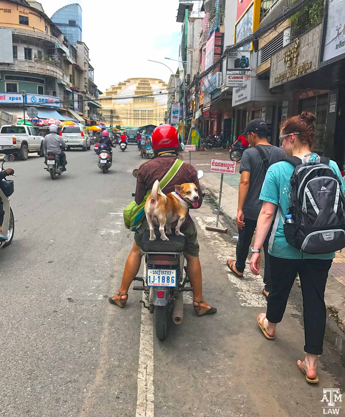 scooter dog