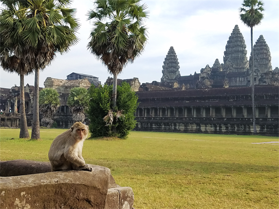 Cambodia- monkey at Angkor Wat