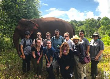 cambodia elephant valley project